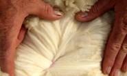 六大常见动物类服装面料的特性、鉴别及保养(上)