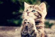 粉晕甜心妆拍摄花絮一