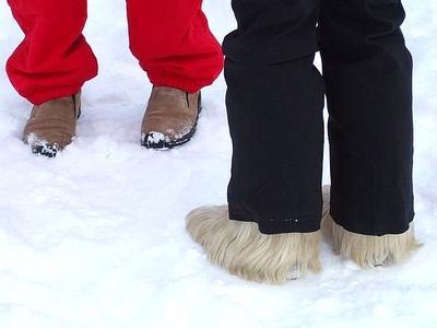 加拿大鞋子