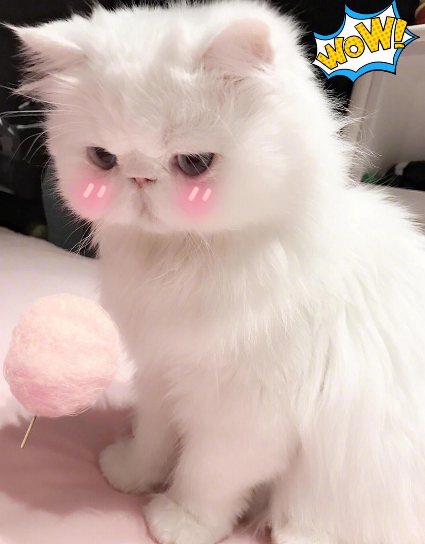 范冰冰晒猫却晒出了自己的化妆台